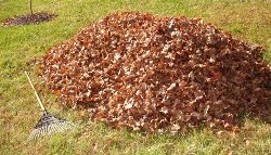 Leaf Collection 2014.jpg