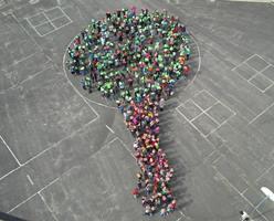 Knight Earth Fest tree.jpg