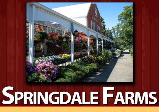 springdale logo_thumb.jpg